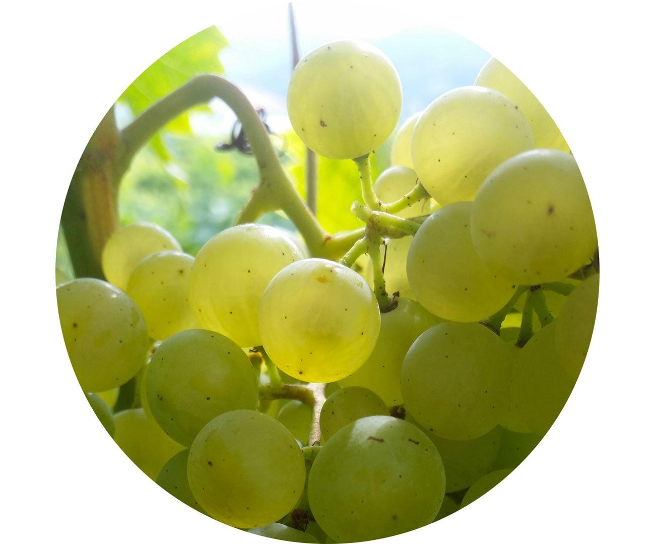 nani-martin-grappolo-uva